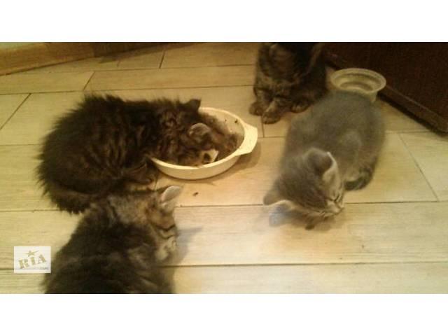 купить бу Отдам котят в добрые руки в Киеве