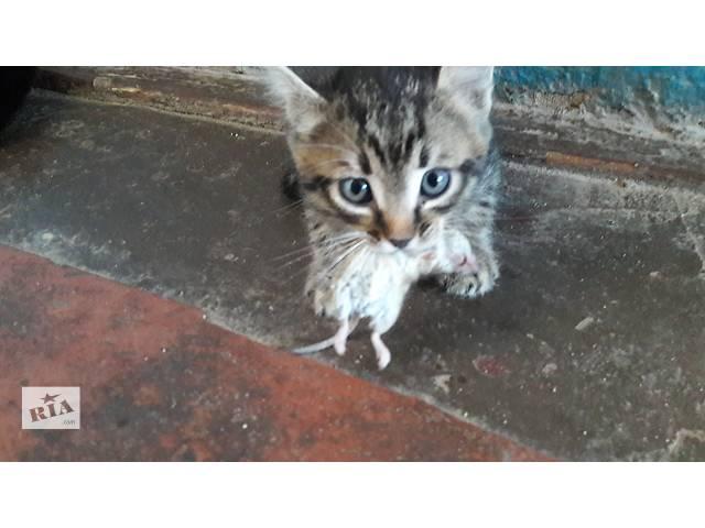 продам Отдам котят в хорошие руки. Мышеловы и крыселовы. бу в Николаеве