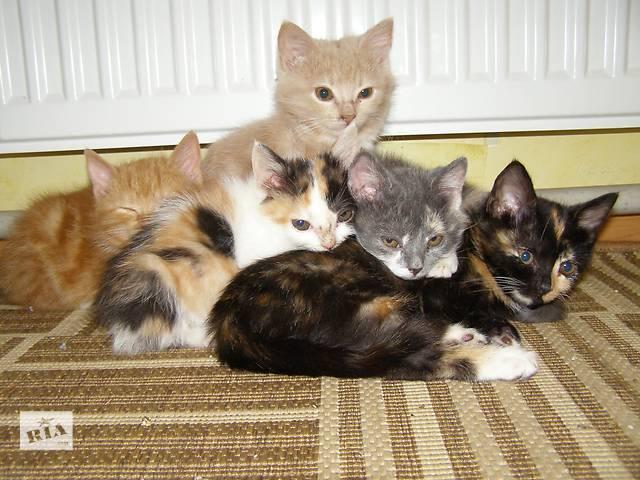 продам отдам котят в хорошие руки бу в Южноукраинске