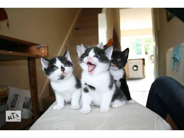 продам Отдам котят в надежные руки бу в Харькове