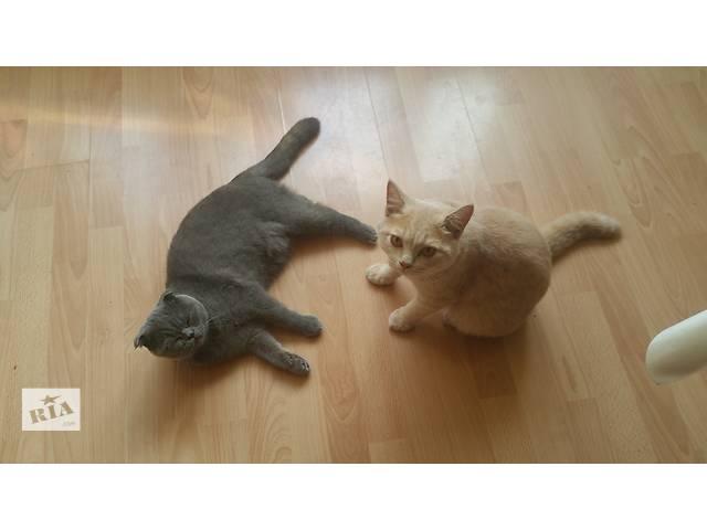 Отдам котиков в хорошие руки - объявление о продаже  в Черновцах