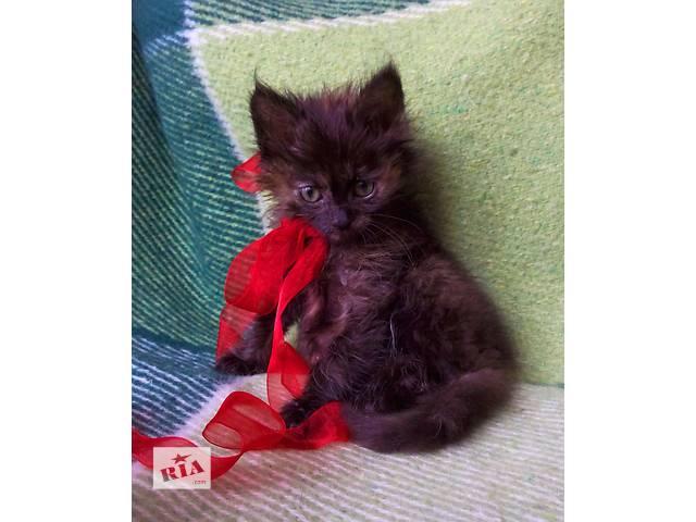 Отдам пушистых котят- объявление о продаже  в Виннице