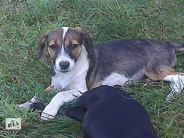 Отдам собаку бесплатно пес охранник- объявление о продаже  в Днепре (Днепропетровск)