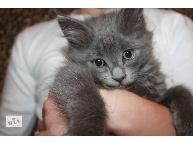 продам Отдам в добрые ручки милых домашних котяток! бу в Харькове