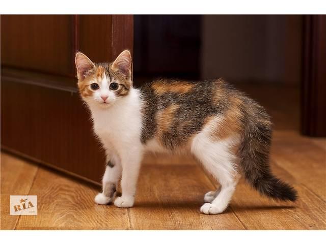 бу отдам в хорошие руки кошку в Донецке