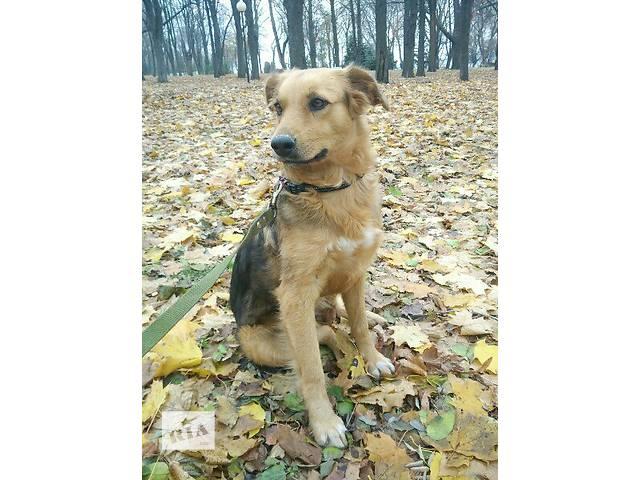 продам Отдам в хорошие руки невероятную собаку  бу в Днепре (Днепропетровске)