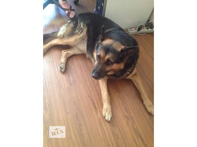 продам Отдам замечательного, доброго, ласкового пса в добрые руки ... бу в Днепре (Днепропетровске)