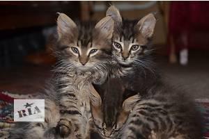 отдаю котят в добрые и любящие руки