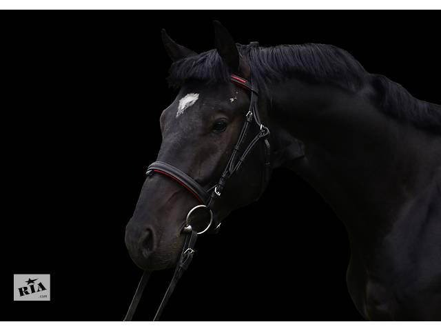 продам Продам лошадь Торс Диамант - 2014 бу в Кременці (Тернопільській обл.)