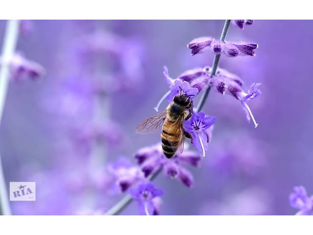 продам Пчеловодство является сельским семейным бизнесом бу в Зачепиловке
