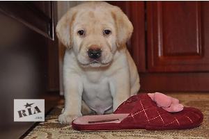 купить бу Собаки, щенки в Запорожье Вся Украина