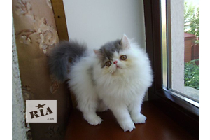 бу Кошки, коты, котята  в Украине