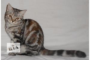 Кошки, коты, котята в Днепропетровске - объявление о продаже Вся Украина