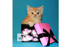 купить бу Кошки, коты, котята в Днепропетровске Вся Украина