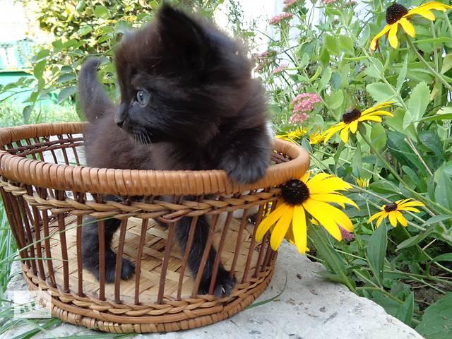 купить бу Подарую кошеня в Львове