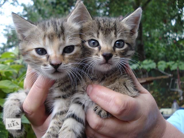 купить бу Подарую кошенят в Ровно
