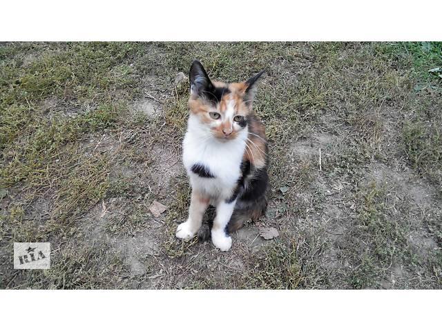 Подарую кошенят- объявление о продаже  в Луцке