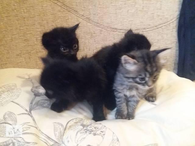 продам Подарю домашних котят! бу в Днепре (Днепропетровск)