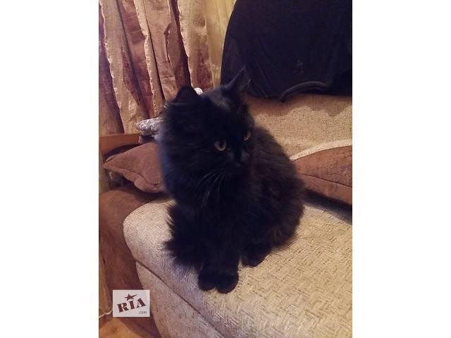 Подарю котёнка 5 мес. хорошим людям.- объявление о продаже  в Днепре (Днепропетровск)