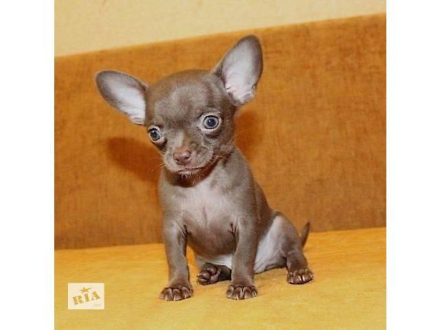 Домашние животные онлайн объявления продажа щенков и