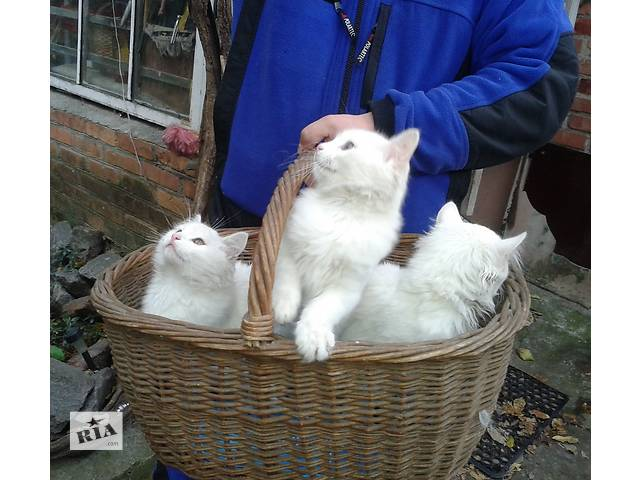 бу Подрощенные котята (мальчишки) в добрые руки в Харькове
