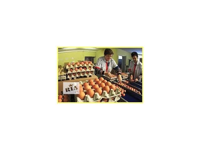 купить бу Польша. Упаковка сортировка куриных яиц.  в Украине