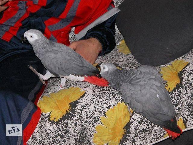 белье отводит попугай жако купить в ростове на дону все