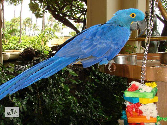 Самый большой попугай ара