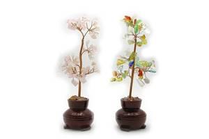 Растение бонсай