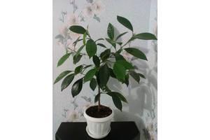 Растения бонсай