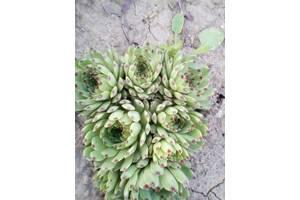 Гарно квітучі рослини