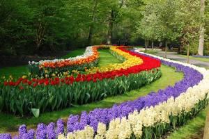 Садовые луковичные растения
