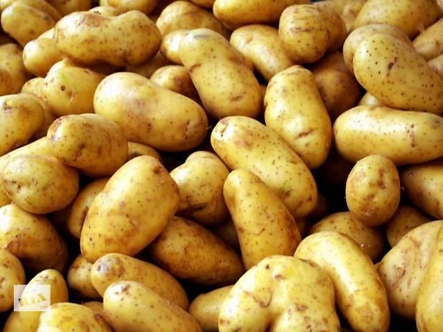 продам Продаю посадочный сортовой картофель бу в Новгород-Северском
