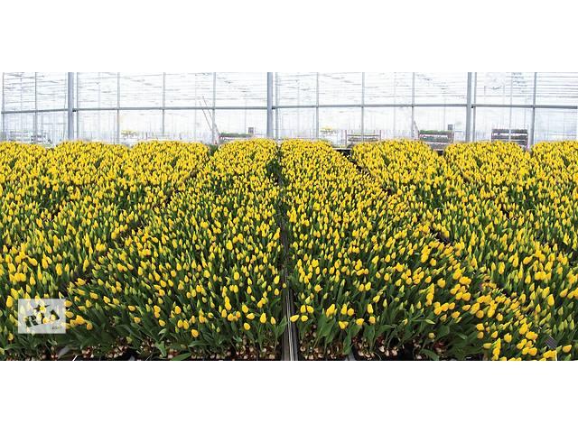бу Практика в Дании (теплицы - цветы/салаты)  в Украине
