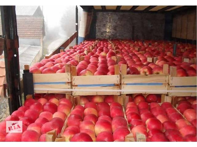 продам Працівники на склади овочів-фруктів, Чехія бу  в Украине