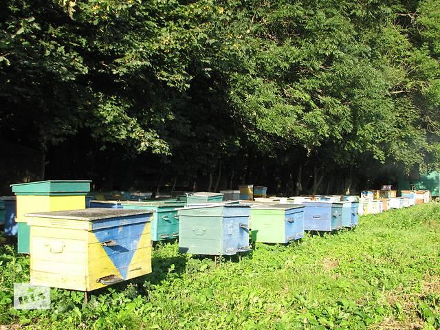 продам правильный мед бу  в Украине