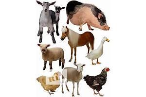 Оголошення Їжа для тварин