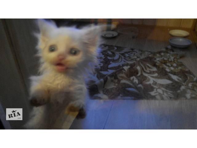 купить бу Продається милий котик  в Червонограде