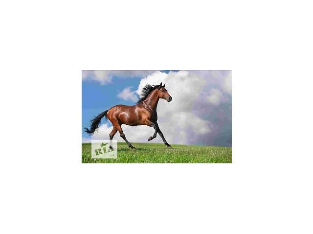 купить бу Куплю лошадей дорого в Калиновке