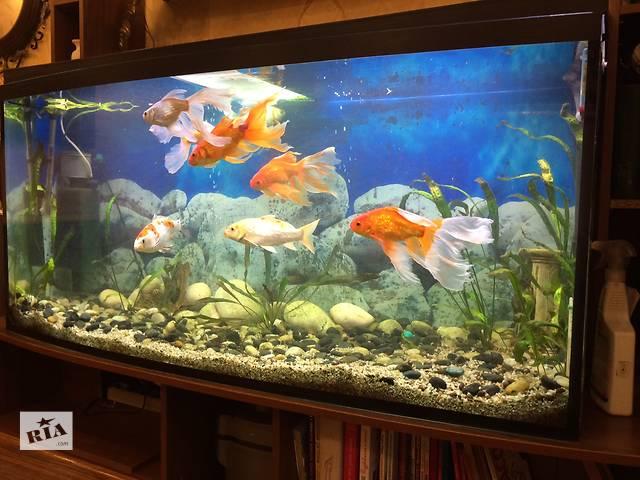 Продам аквариум 420 л с оборудованием и подставкой- объявление о продаже  в Одессе