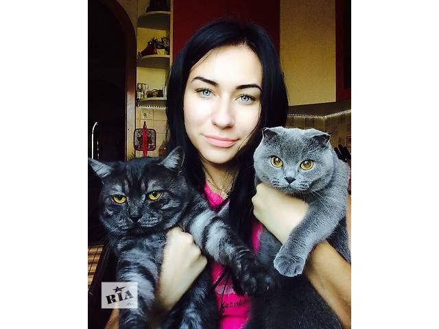 продам Продам британских котят бу в Донецке