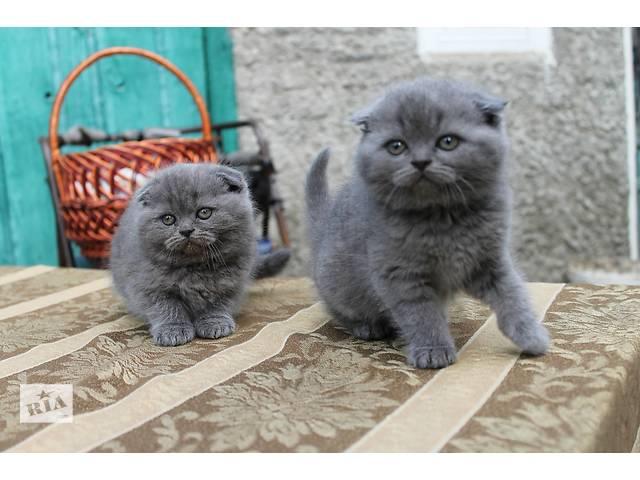 Продам чумачедче красивых котят разных окрасов по разным ценам- объявление о продаже  в Виннице