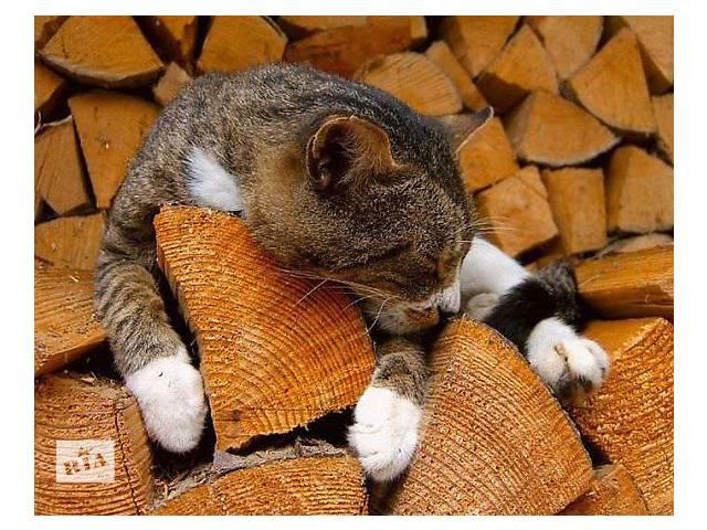 продам Продам дрова твердых пород! бу в Полтавской области