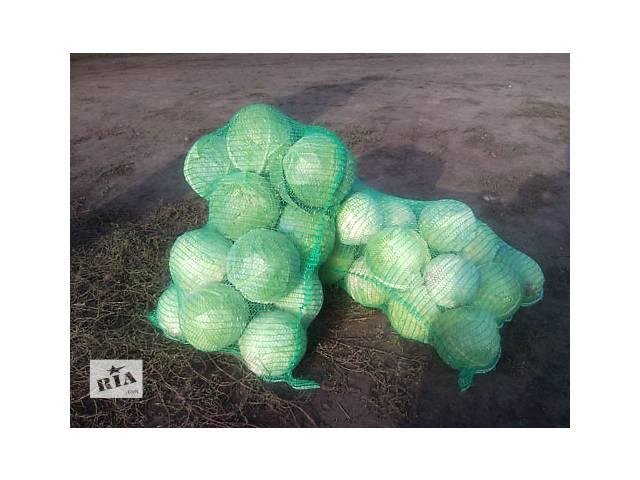 бу Продам капусту 2 грн. за 1 кг.с доставкой на дом в сетках без повреждений м.Полтава в Полтаве