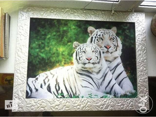 продам Продам картину сибірских тигров бу в Киеве
