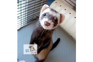 Другие животные - объявление о продаже