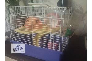 Продам клетку для хомячка)