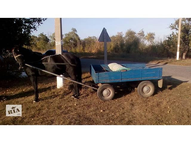 продам Продам кобилу з возом та упряжью  бу в Кропивницком (Кировограде)