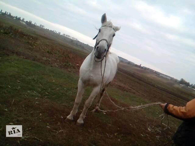 Продам кобилу- объявление о продаже  в Луцке