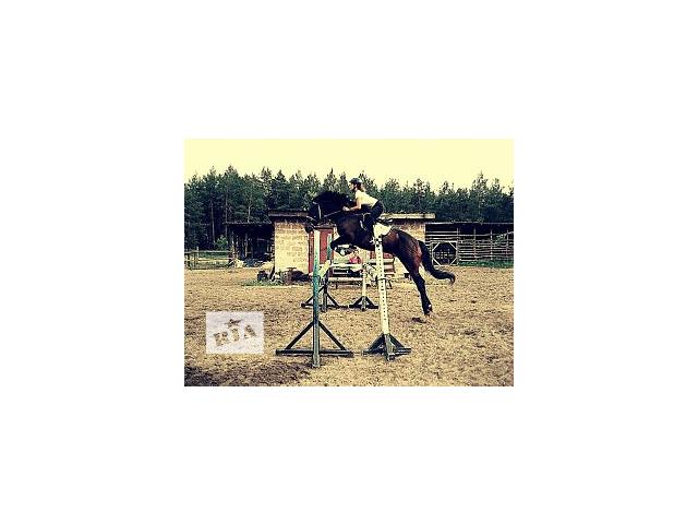 бу Продам коня для занятия спортом в Киеве